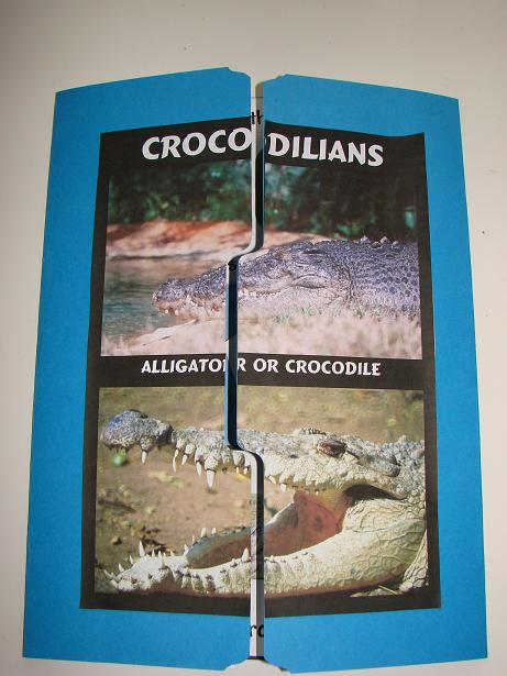 crocodilian lapbook cover