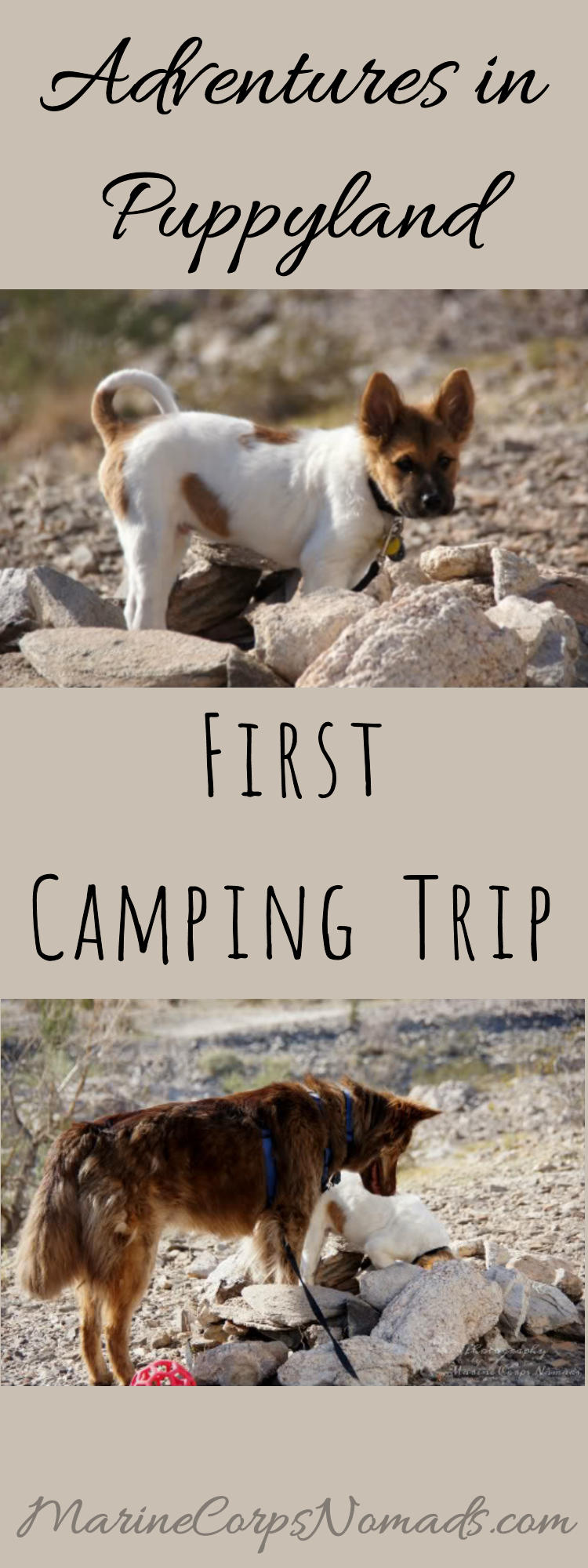Adventures in Puppyland First Camping Trip | Kofa National Wildlife Refuge | Explore Arizona | Camping with Dogs | Marine Corps Nomads