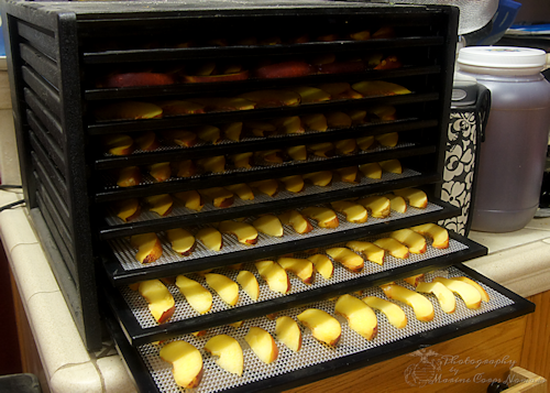 Dehydrating Nectarines