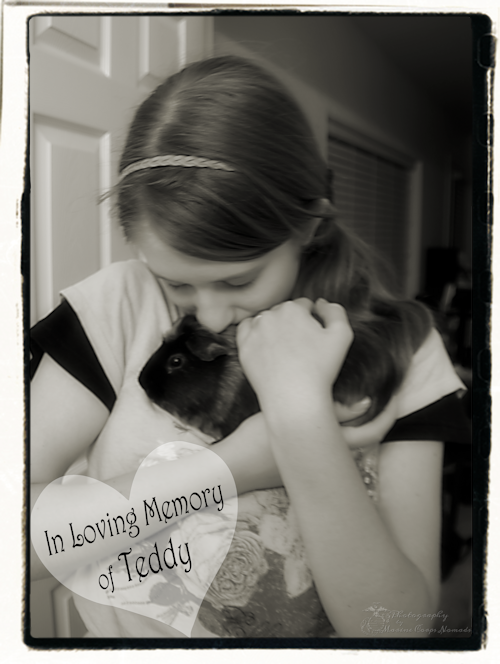 In Loving Memory of Teddy