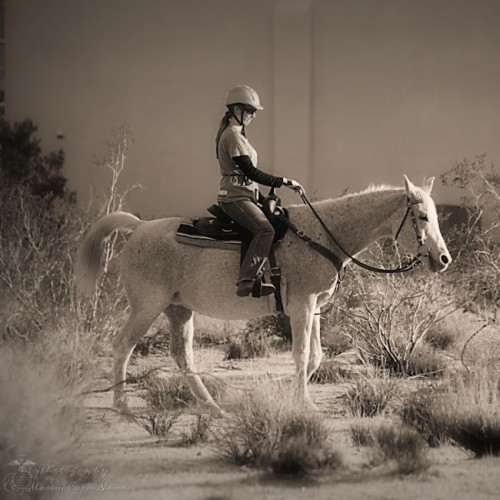 Munchkin Riding Dixie