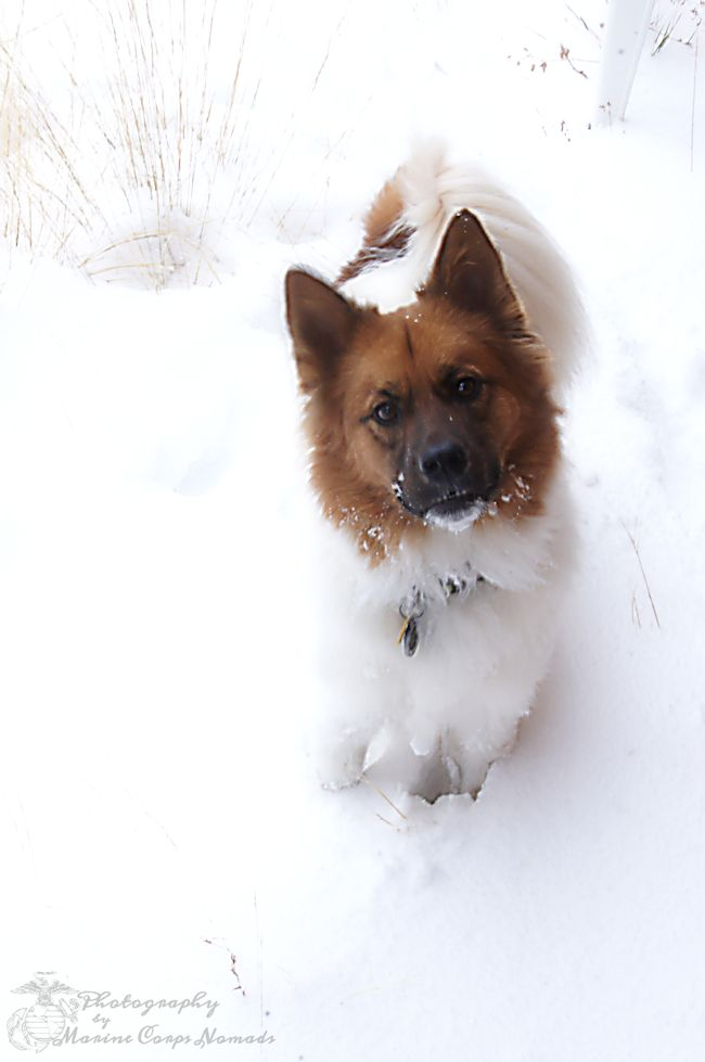 Wyatt in Snow