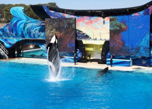 Shamu One Ocean Show