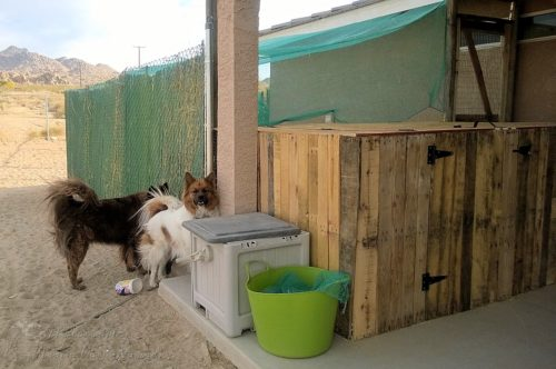 Dogs checking out the chickens in the chicken run