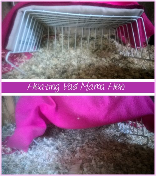 Heating Pad Mama Hen