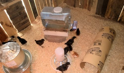 A glimpse inside of the coop with food and water
