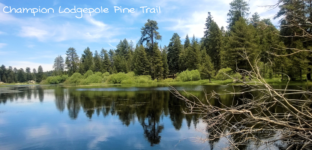 Hiking Champion Lodgepole Pine Trail, Big Bear, CA