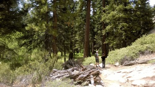 Daddy and daughter hiking the Champion Lodgepole Pine Trail