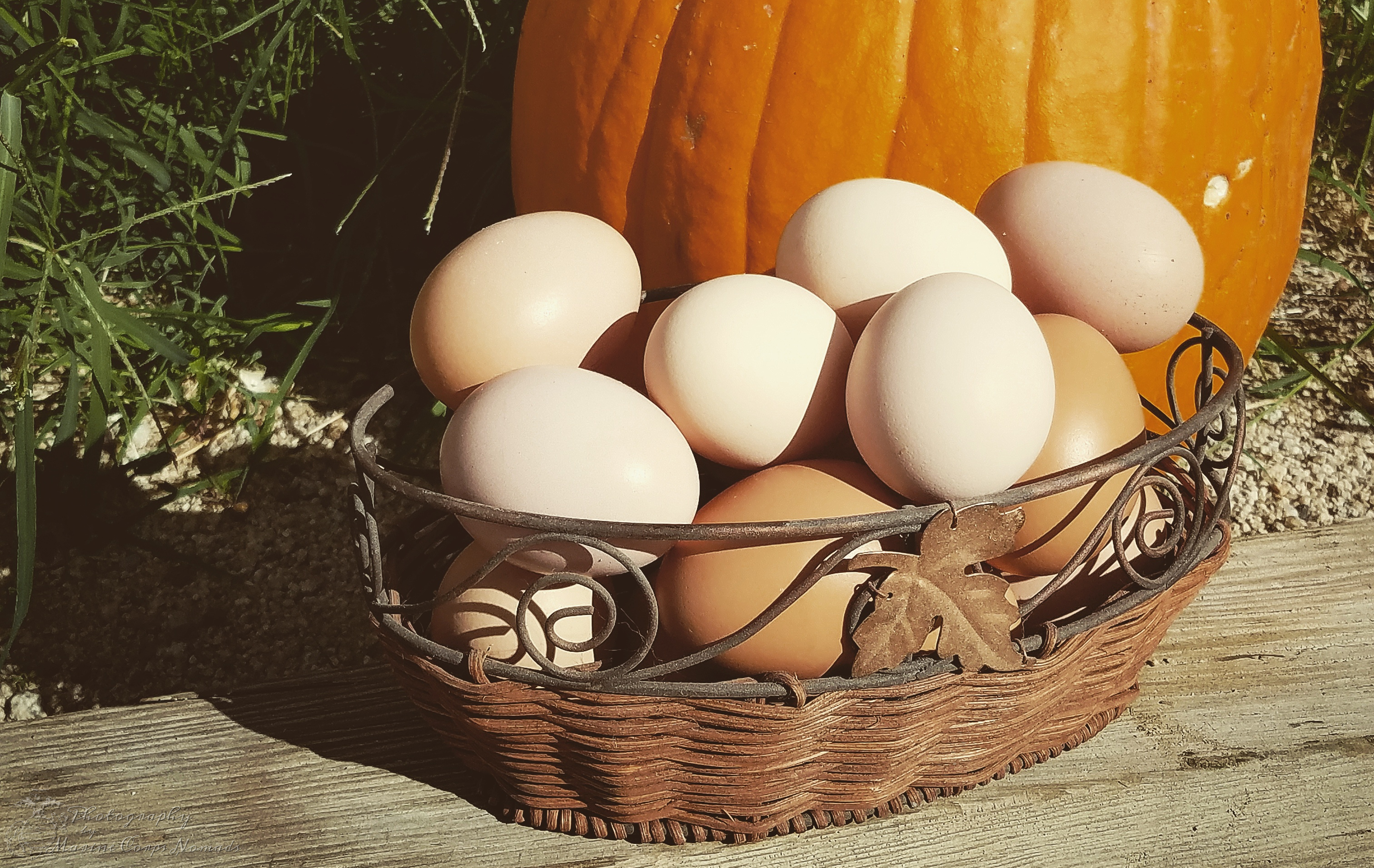 Farm Fresh Eggs with a Pumpkin