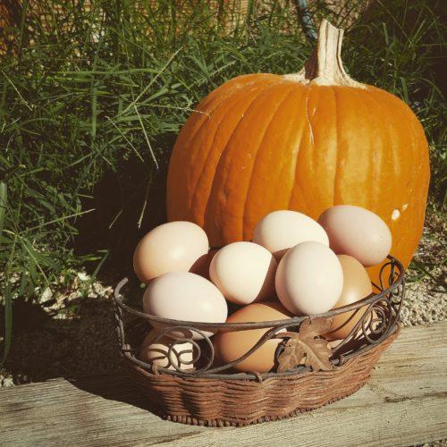 Eggs with a Pumpkin