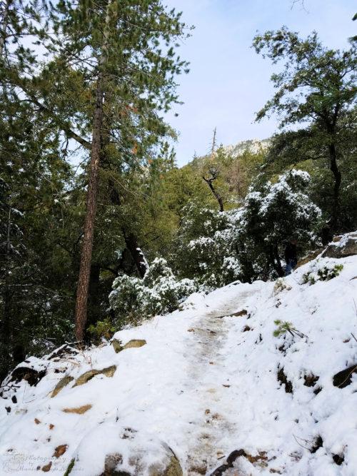 The snowy path ahead