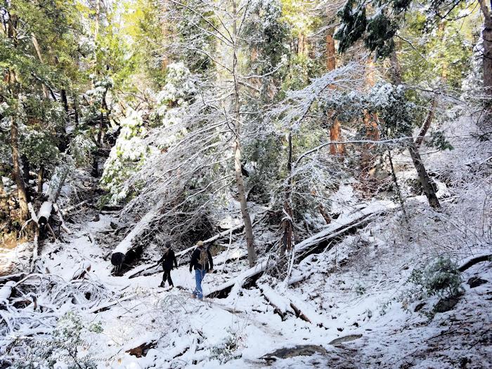 Ernie Maxwell Scenic Trail - snowy hike