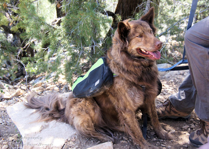 10 Tips for Hiking with Dogs