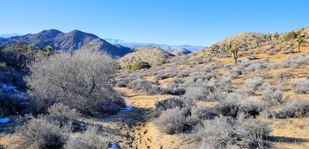 Hiking Short Loop Trail | Black Rock Canyon | Joshua Tree National Park