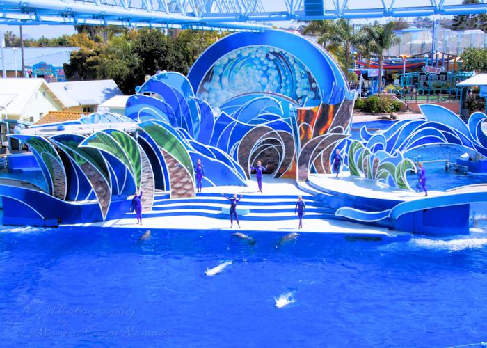 Sea World San Diego Dolphins