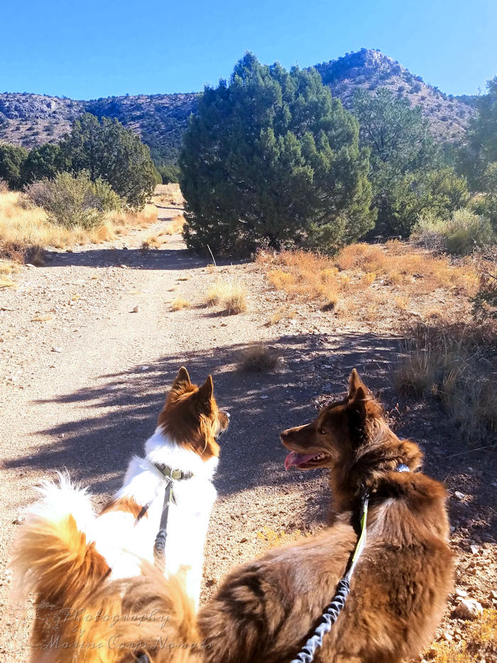 Wiley and Wyatt on a Hike