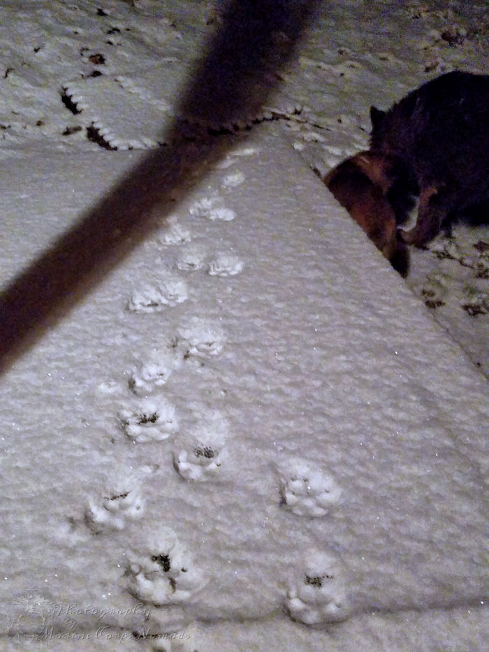 Snowy puppy footprints